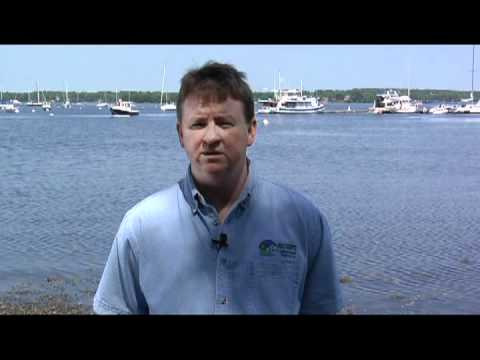 Red Tide In The Gulf Of Maine Explained