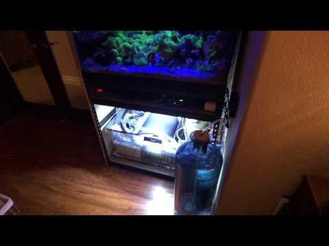 DIY Calcium for Snails and Shrimp - Save on Nutritional Supplementsиз YouTube · Длительность: 2 мин7 с