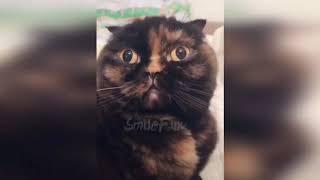 Тест на психику с котами