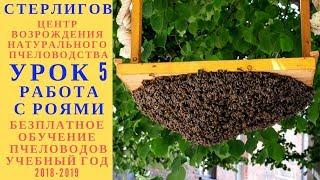 123 МОСКВА ГЕРМАН СТЕРЛИГОВ МЕД БЕЗПЛАТНОЕ ОБУЧЕНИЕ ПЧЕЛОВОДСТВУ УРОК 5 РОЕНИЕ ПЧЕЛ