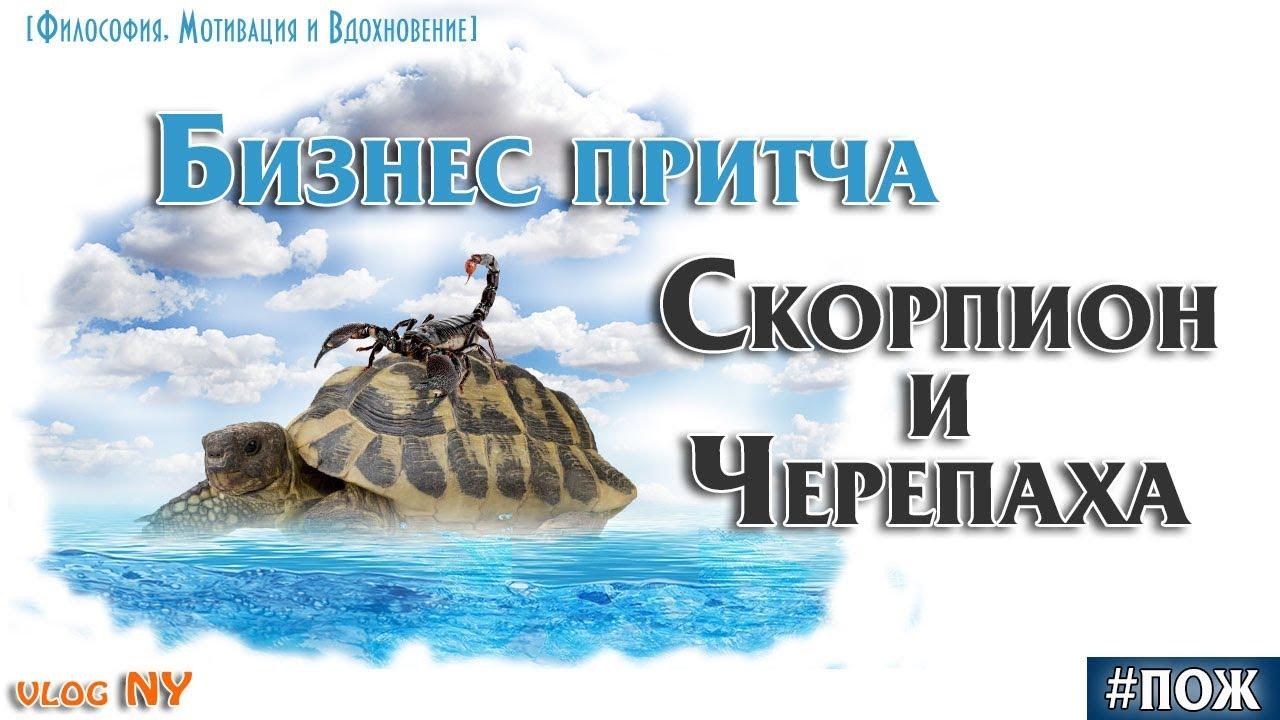 московских картинка скорпион и черепаха современном мире всем