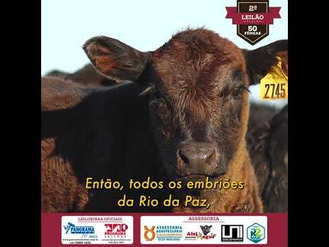 Filme 3 - EMBRIOES Angus Rio da Paz
