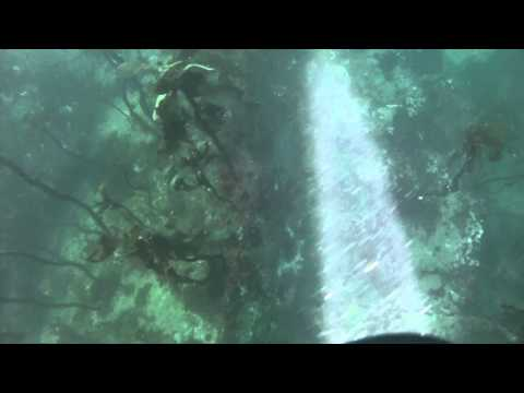 Diving 2015 | Ogden Point Breakwater