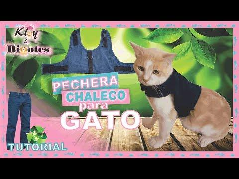 PECHERA CHALECO PARA GATO ✂TUTORIAL👖♻ Ropa para Gato