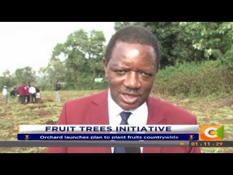 An initiative to plant fruit  trees launched