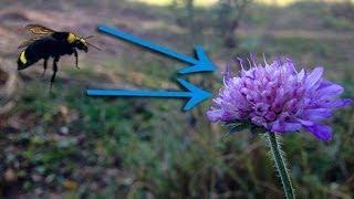 видео как объединить слои в фотошопе