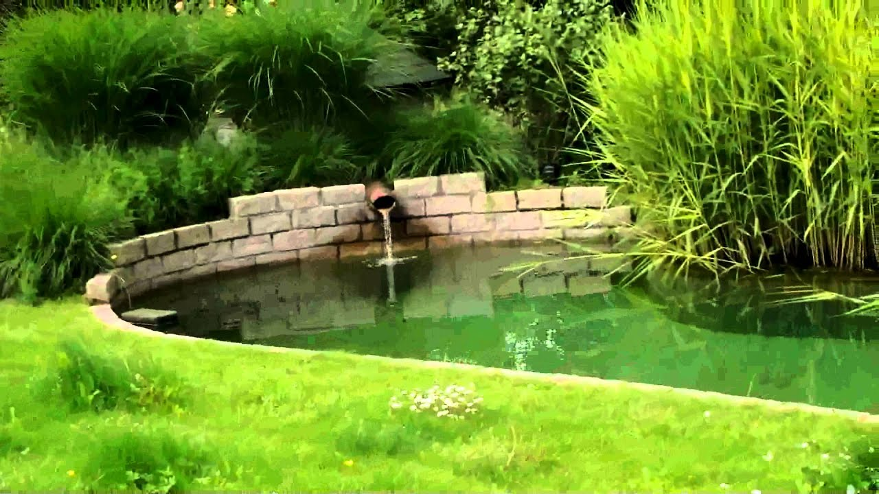Bassin De Baignade Autoconstruction bassin de baignade naturelle  help svp - forum-bassin