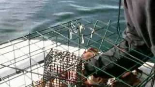 Crab Fishing in the Puget Sound off of Orca's Island