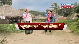 Loka Nakali Katha Asali: Kalia Scheme