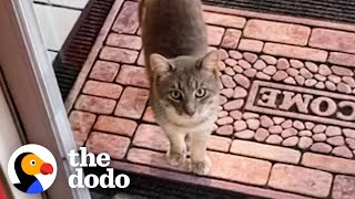 Family Discovers Cat Living Under Their Porch — Watch What Happens Next! | The Dodo Cat Crazy