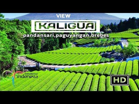 surga-nya-kebun-teh-indonesia,kaligua-brebes