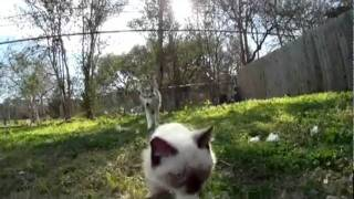 Котенок и волк