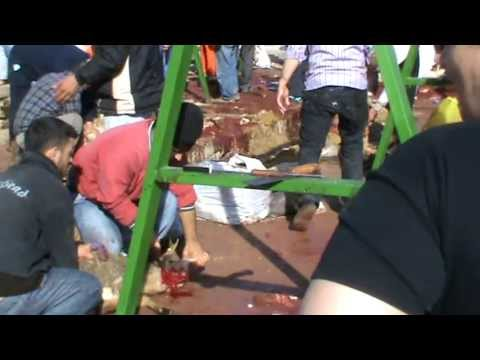 Koyun kesilirken KKB. Turkey is cut in the sheep. Part of the Sacrifice. Kurban slaughtering