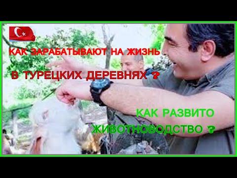 Как зарабатывают на жизнь в турецких деревнях?Как развивается животноводство?Семья мужа золовки