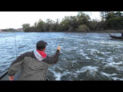 Oswego River Fall Salmon Hammer Fire Cure!