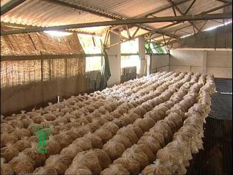 Mushroom Cultivation, kannada 1