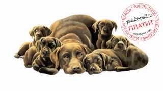 Нарисованные карандашом собаки  КАк нарисовать карандашом собаку и щенят