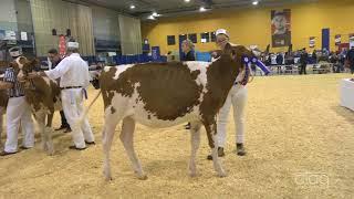Suprême Laitier 2017 - Génisse Junior - Holstein rouge
