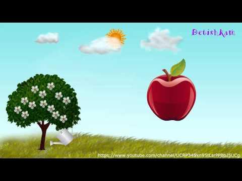 Как растет яблоко для детей