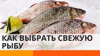 Как отличить свежую рыбу от испорченной: советы эксперта – Утро в Большом Городе