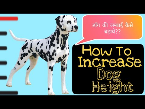 How to increase dog height in Hindi