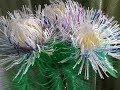 Поделки - Как сделать цветы из пластиковых бутылок!