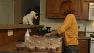 How to Prepare a Raw Diet for Cats