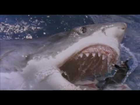 The AWESOMENESS that is :: Shark Attack 3 - MEGALODON! - YouTube