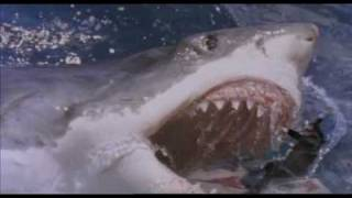 The AWESOMENESS that is :: Shark Attack 3 - MEGALODON!