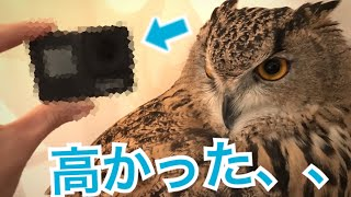 あなたの好みのフクロウの動画をお届けします。 ➡http://urx.blue/JkAg ...