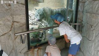 農業被害を防ぐために駆除されたシカやイノシシをライオンやトラなどの...