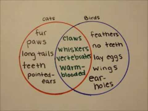 How To Make A Venn Diagram Youtube