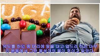 """""""다이어트 식품, 체중 더 증가시킬 수 있다&…"""