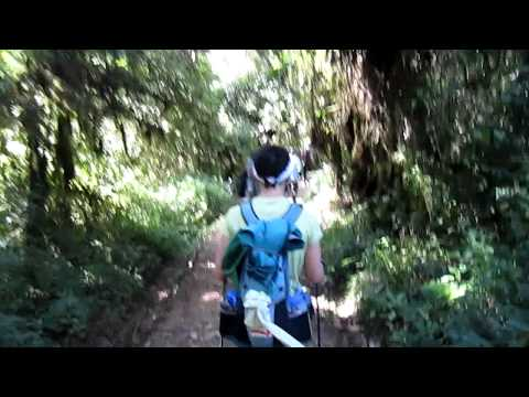 Kilimanjaro - descending from Mweka Camp (CW)