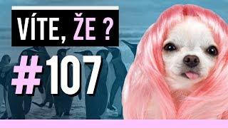 #107 ● VÍTE, ŽE...?