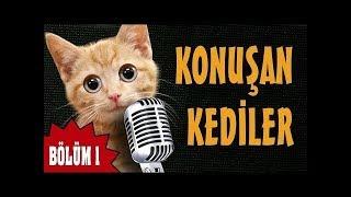 Komik Konuşan Kediler - Gülme Garantili, Çok Eğlenceli, Çok Güleceksiniz