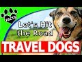 Top 10 Best Dog Breeds to Travel With ❤ Dogs 101