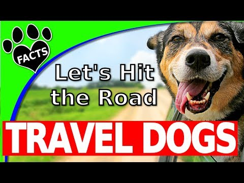 Top 10 Best Dog Breeds to Travel With Dogs 101 - Animal Facts