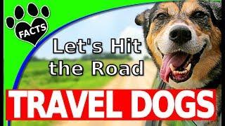 Las 10 mejores razas de perro para viajar con ❤ Dogs 101