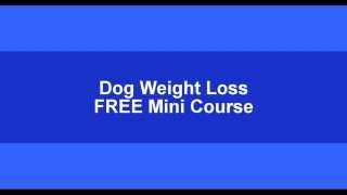 Daily calorie intake for Dogs- FREE Calorie Calculator-calorie counter