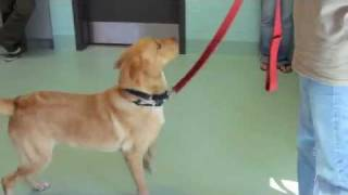 Canine Good Citizen Training At Southold Animal Shelter