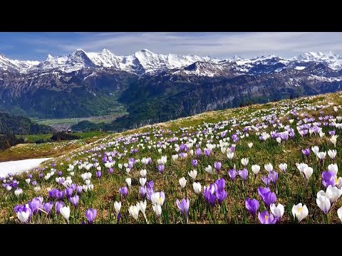 """Relaxing Music, Relaxing Meditation Music """"Flower Canyon"""" by Tim Janis"""
