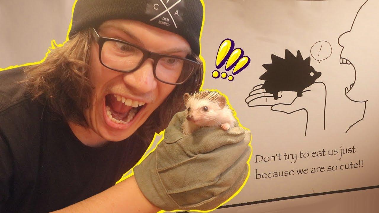 Do Not Visit the Hedgehog Cafe in Japan
