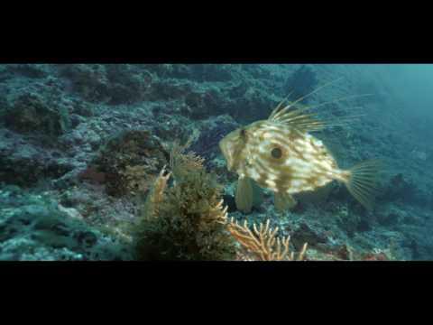 Cap Croisette - Scuba Diving In The Calanques Of Marseille