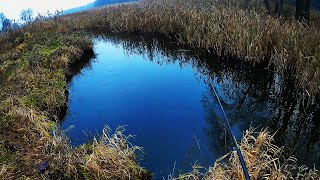 РЫБАЛКА НА КРУПНУЮ ПЛОТВУ Поплавок на реке Разведка по старым местам