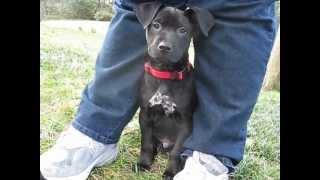Toby Dixie Dog Rescue