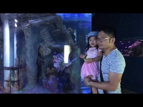 SHARJAH AQUARIUM UAE OCTOBER 25,2017 l maily lubid