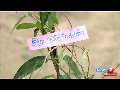 aavaram poo utiliza para la diabetes