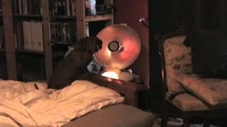 Wiener By The Heat Lamp