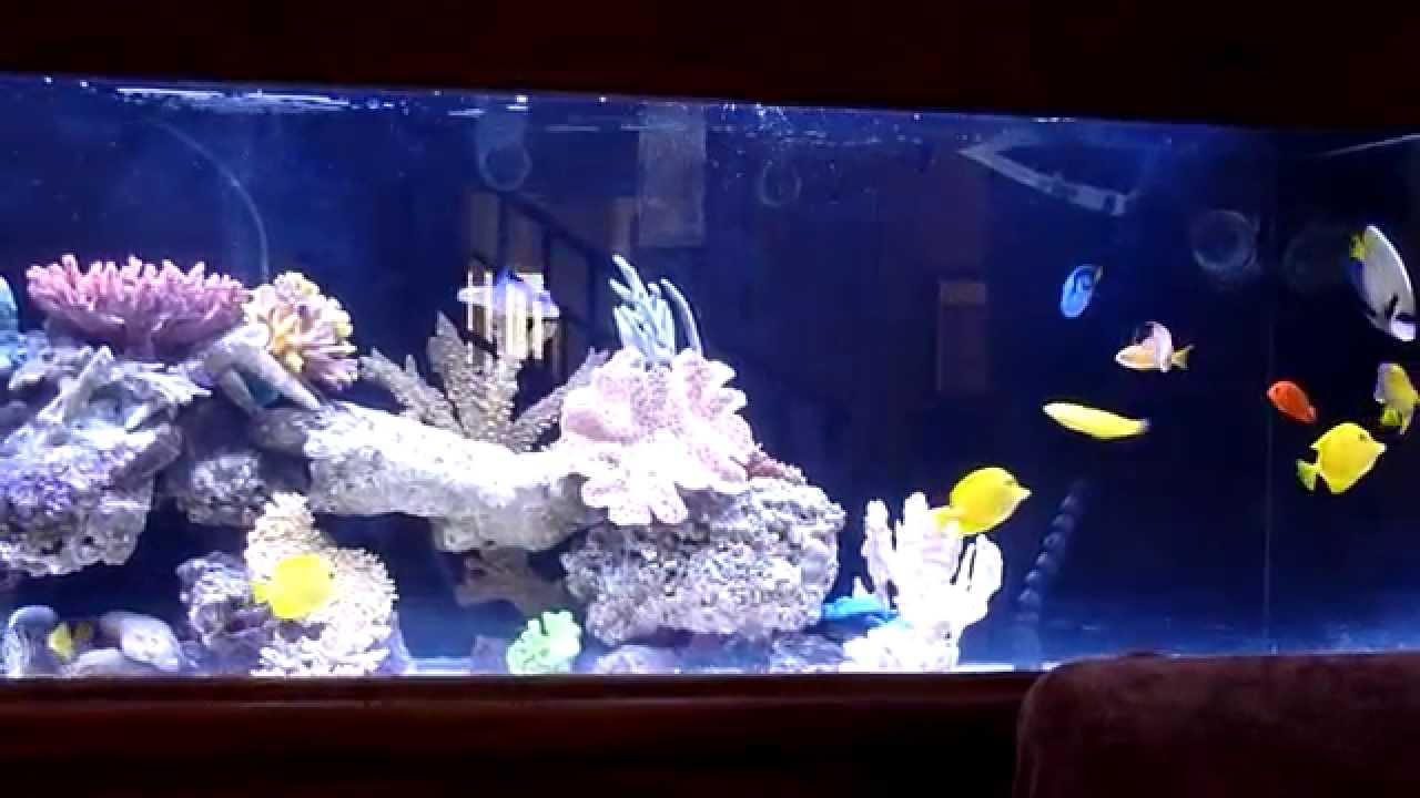 Aquarium Mancave 240 Gallons Saltwater Aquarium Fowlr 8